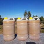 75 ltr koud geperste ecologische olijfolie: onze eerste olie!
